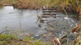 Woda płynie w małej rzece zbiory wideo