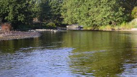 Woda płynie w rzece nad skałami zdjęcie wideo