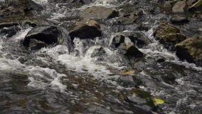 Woda płynie w rzece nad skałami zbiory wideo