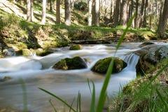 Woda rzeka rusza się bez zatrzymywać przez obfitolistnych lasów Obrazy Royalty Free