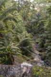 Woda spada na tropikalnej wyspie sao wolumin Fotografia Royalty Free