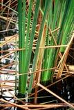 woda trawy Zdjęcie Stock