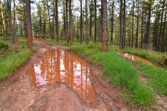 Woda wypełniająca droga z bekowiskami odbija drzewa fotografia stock