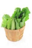 Wodden Bushel full with green salads. Royalty Free Stock Photos
