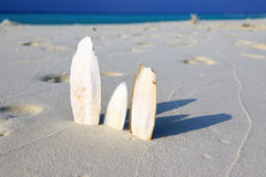 Wodden splitter looking like surfboards standing upright in bright sun on beach, Maldives Stock Photos