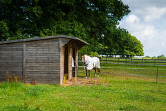 Woden棚子和马 免版税图库摄影