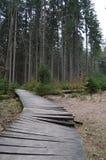 Woden belade med tegel bron i skog Arkivbild