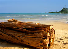 Woden log on the beach Royalty Free Stock Photo