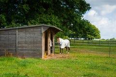 Woden skjul och häst Royaltyfri Fotografi
