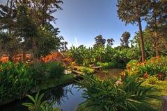 Wodna cecha, rośliny i drzewa w parku w Chimbote, Peru fotografia royalty free