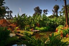 Wodna cecha, rośliny i drzewa w parku w Chimbote, Peru zdjęcie royalty free