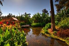 Wodna cecha, rośliny i drzewa w parku w Chimbote, Peru zdjęcie stock