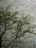Wodna czochra z drzewem Fotografia Royalty Free