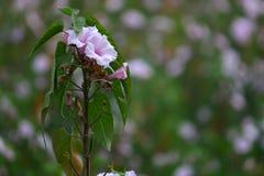 Wodna dorośnięcie kwiatów roślina obrazy royalty free