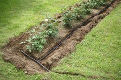 Wodna irygacja w flowerbed zdjęcia royalty free