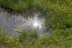 Wodna kałuża na dzikiej zielonej łące obrazy royalty free