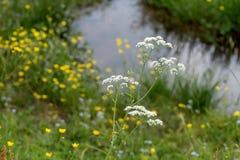 Wodna kałuża na dzikiej zielonej łące zdjęcia stock