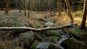 Wodna kaskada na małej halnej rzece zdjęcie wideo