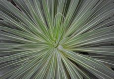 Wodna kropelka w rośliny centrum Fotografia Stock