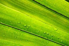 Wodna kropelka z zielonym liściem Zdjęcia Royalty Free
