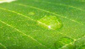 Wodna kropla na drzewnej liść teksturze zdjęcie royalty free