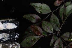 Wodna kropla na kamieniu zdjęcia royalty free