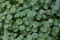 Wodna kropla na liść zielonej roślinie fotografia royalty free