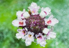 Wodna kropla na trawa kwiacie i plamy tle royalty ilustracja