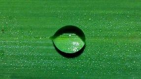 Wodna kropla na trawa liściu, makro- wody kropla obraz royalty free