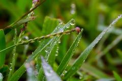 Wodna kropla na trawie 2 Obraz Royalty Free