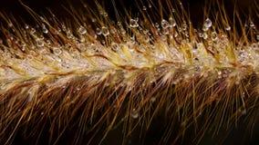 Wodna kropla na trawie Obrazy Royalty Free