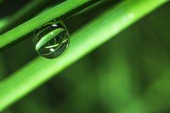 Wodna kropla na trawie w makro- obraz royalty free