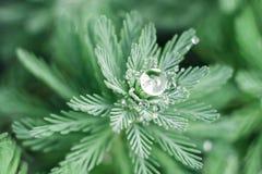 Wodna kropla na zielonej roślinie po deszczu Obraz Stock