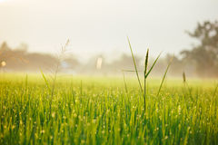 Wodna kropla na zielonej trawie zdjęcia royalty free