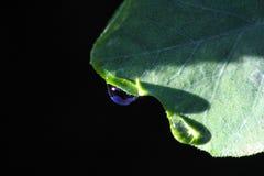 Wodna kropla przy liściem zdjęcia stock
