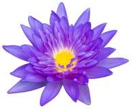 Wodna leluja lub lotosowy kwiat Zdjęcia Stock