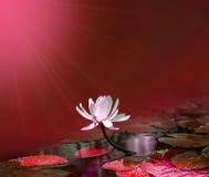 Wodna leluja na czerwonym stawowym tle Obrazy Stock