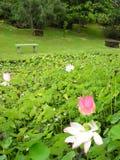 Wodna leluja z ławką Obrazy Royalty Free