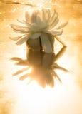 Wodna leluja z złotym światłem słonecznym w ranku Zdjęcia Stock
