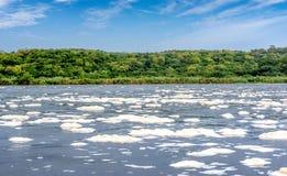 Wodna piankowa tekstura na Wiktoria Nil rzece w północnym Uganda Obraz Stock