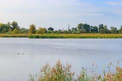 Wodna powierzchnia jezioro w pogodnym jesień ranku przeciw niebieskiemu niebu cloud jabłko kwiaty obszar łąkowego kształtuje char zdjęcie royalty free