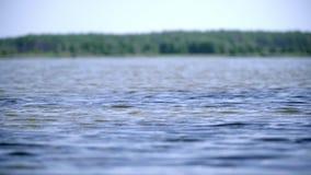 Wodna powierzchnia z lasem na horyzoncie Piękny lasowy jezioro z spokój wodą zbiory wideo
