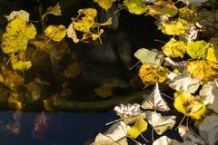 Wodna powierzchnia z złotymi jesień liśćmi Obrazy Royalty Free