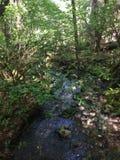 Wodna rzeka! Piękny las fotografia stock