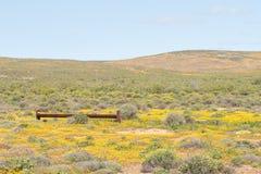 Wodna synklina między żółtymi kwiatami Zdjęcia Royalty Free