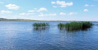 Wodna zieleń Zdjęcia Stock