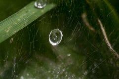 Wodne kropelki na paj?k sieci, krople woda, krople woda na paj?k sieci, paj?k, sie? zdjęcia stock