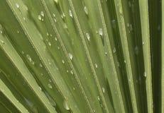 Wodne kropelki nad palmowym liściem obrazy royalty free