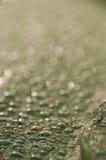 Wodne kropelki osiedlać na zielonym tle Obrazy Royalty Free