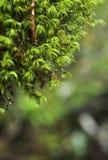Wodne kropelki - woda w liściach obrazy stock